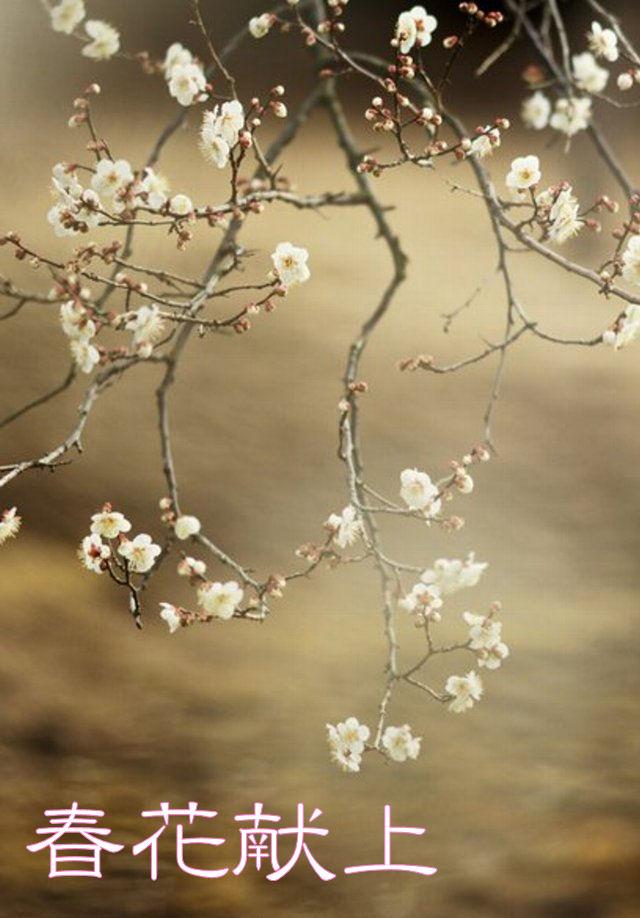 春花献上1.jpg